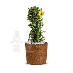 Blumentopf mit Kaktus als Miniatur von Günter Reichel